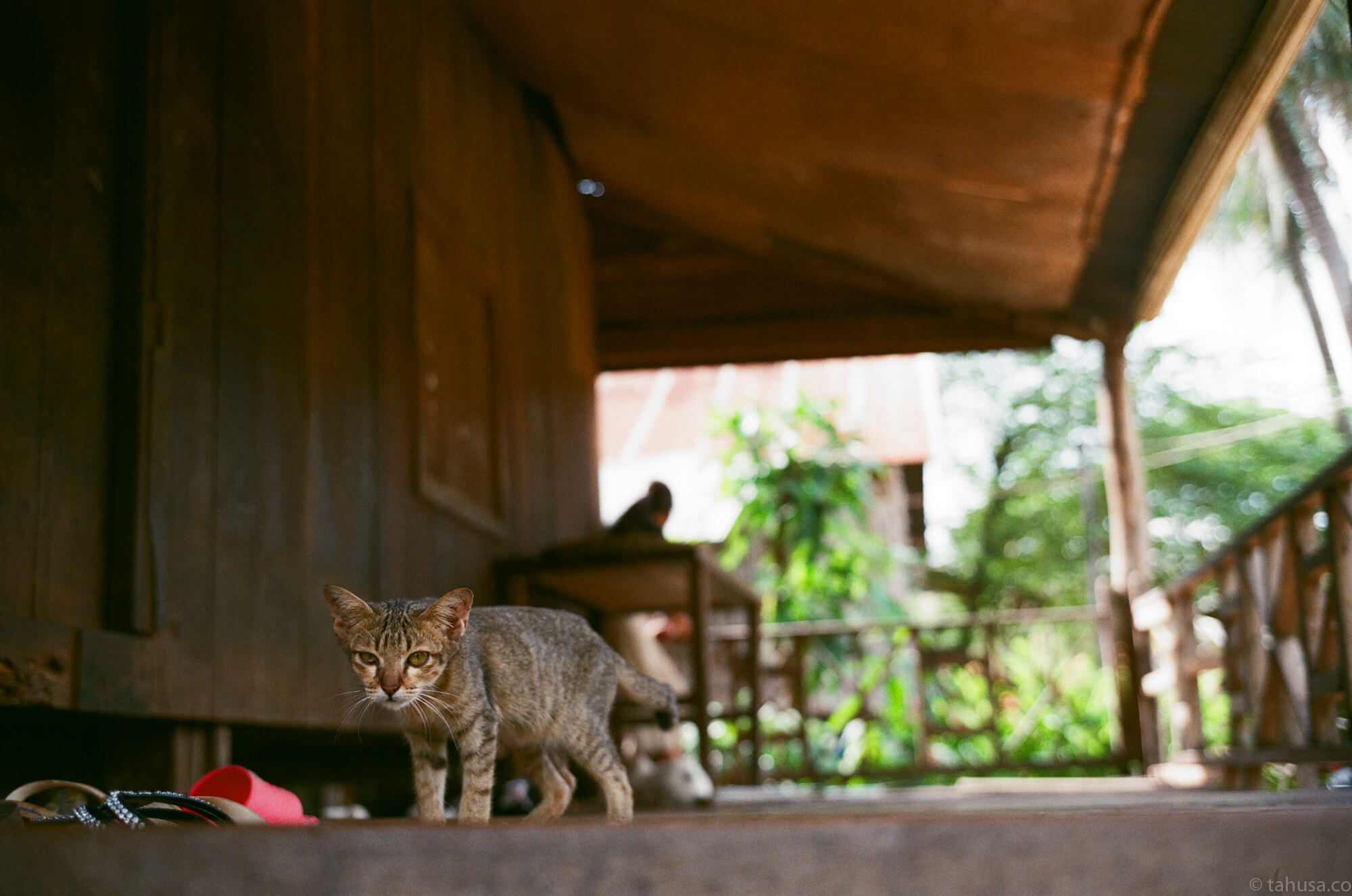 baby-cat-in-one-of-the-family-cambodia-angkor-siem-reap-south-east-asia-travel-travelling-street-snap-using-leica-m2-summicron-35mm-f2-v1-8elements-analog-film-is-fuji-fujifilm-superia-premium-400-iso400