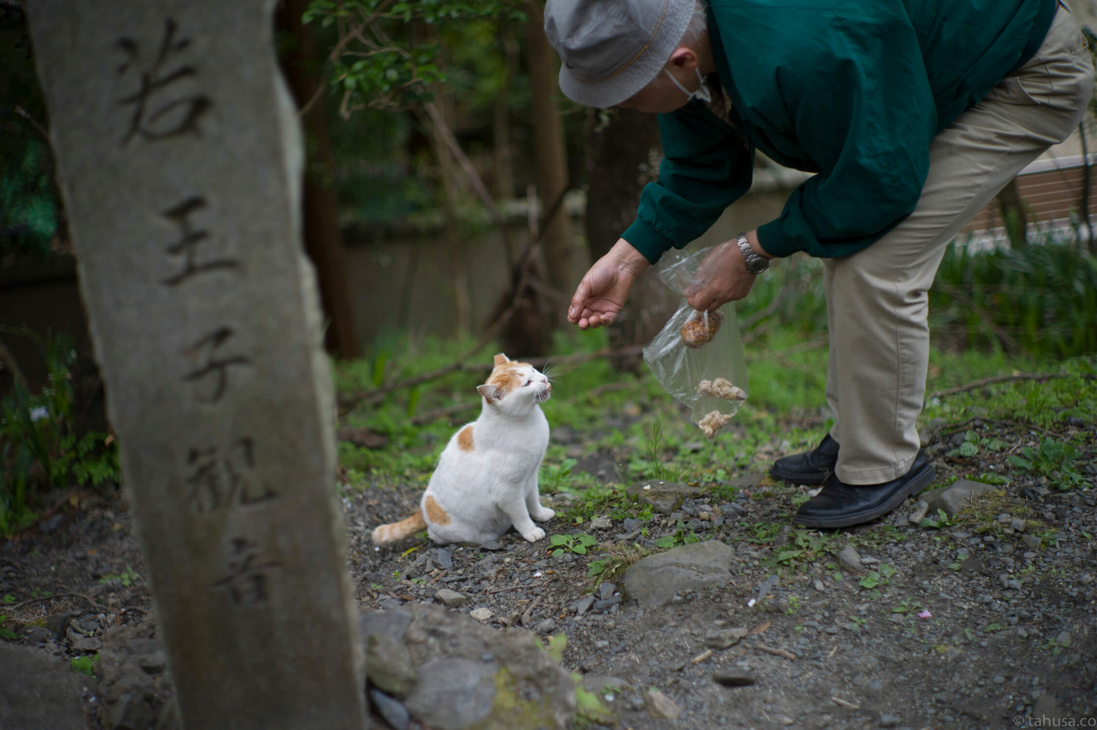 man-feeding-cat-in-Philosopher's-Walk-kyoto-sakura-season-japan-japanese-street-snap-portrait-using-leica-m9-m9p-Noctilux-50mm-50-f1-f1.0-e58-v1-digital-camera-travel