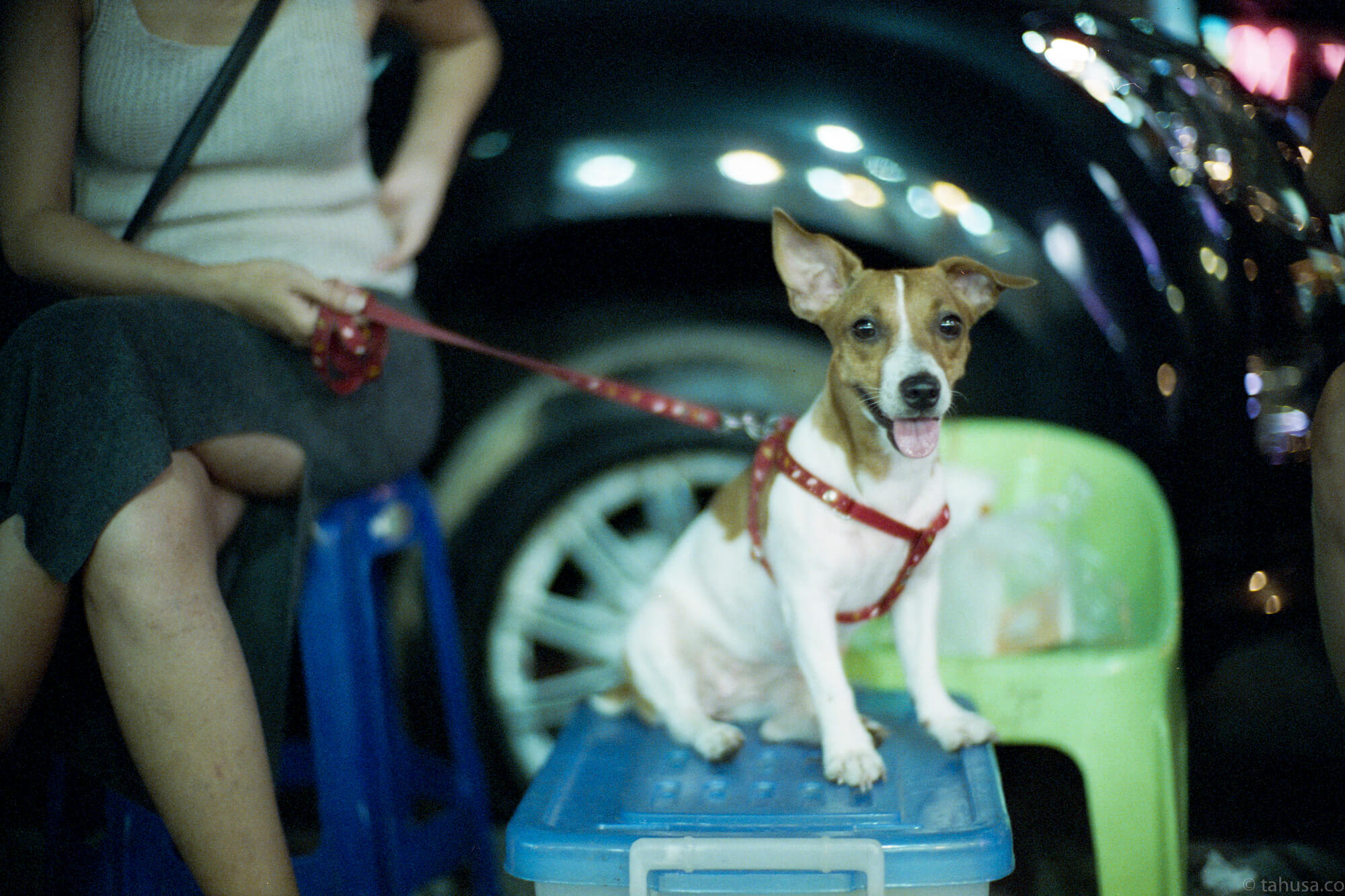 dog-with-its-owner-pattaya-thailand-HK-Cinestill-800T-800-iso800-Tungsten-film-movie-kodak-with-Noctilux-50mm-f1-f1.0-e58-v1-large-aperture-bokeh-grain-pushed-street-snap