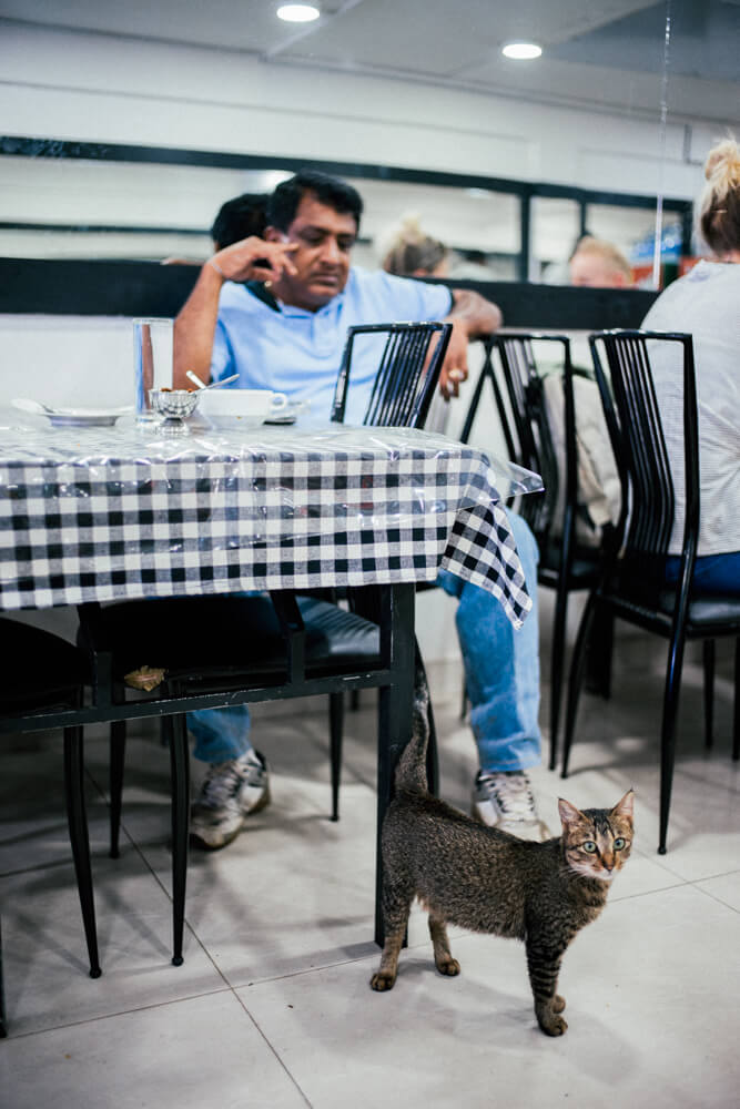 Cute-cat-Nuwara Eliya-Restaurant-lunch-time-Backpacker-Alone-Street-snap-SriLanka-Sri-Lanka