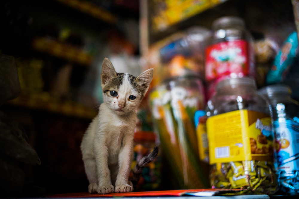 baby-cat-with-snacks-ella-sri-lanka-local-snack-store