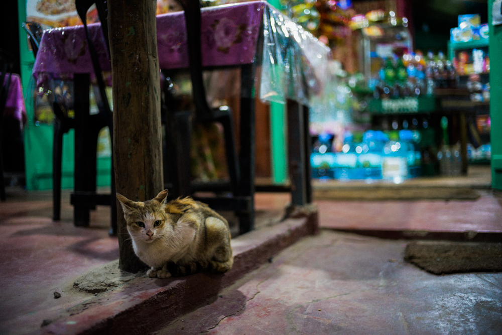 stray-cat-outside-restaurant-nervious-bokeh-sri-lankan-restaurant-in-ella