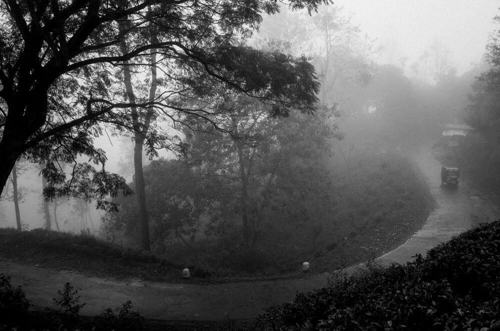 tuktuk-passing-me-alone-in-tea-plantation-wet-heavy-fog-ella-sri-lanka