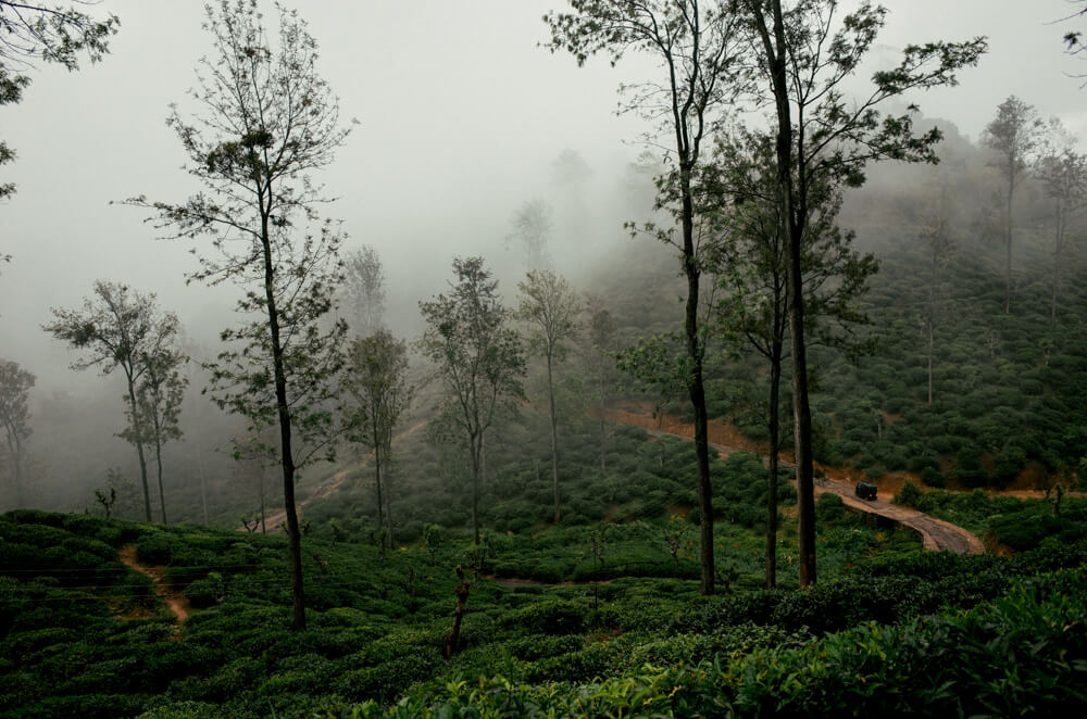view-in-ella-all-nature-tea-plantations-road-rough