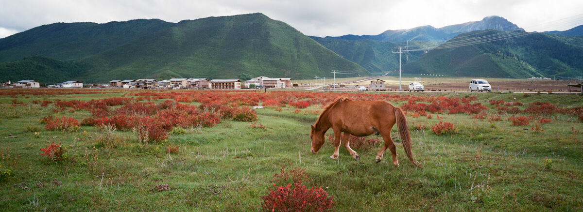 horse-having-grass-eaing-landscape-tibetan-culture-Yunan-Shangrila-China-travel-Agfaphoto-agfa-vista-plus-400-iso400-film-negative-snap-Xpan-Hassel-Hasselblad-XpanII-45mm-f4-wide-pano 8