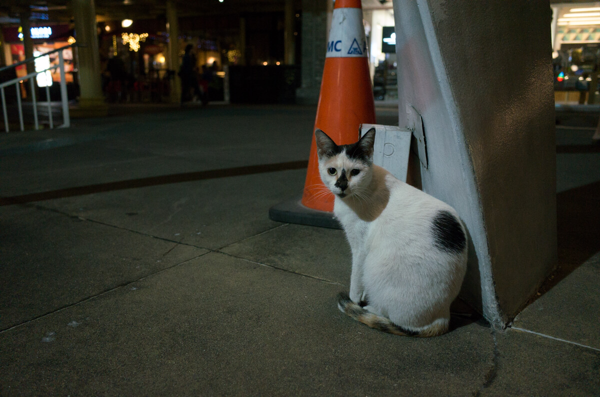 cat-staring-at-me-lonely-night-taguig-manila-philippines-filipino-south-east-asia-travel-trip-local-life-ricoh-GR-digital-camera-city-scanner-photowalk-street-snap-point-and-shoot