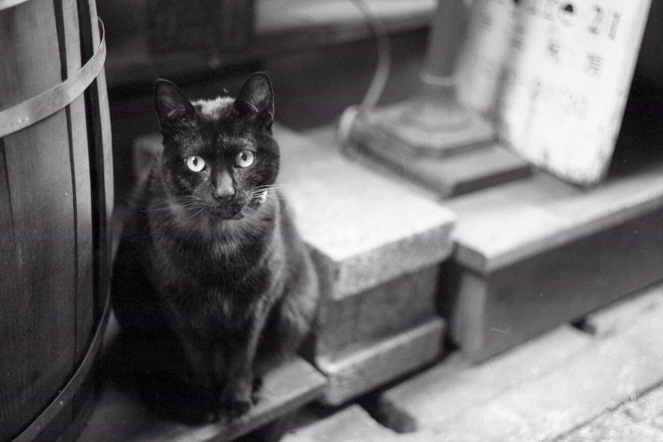 Analog-film-review-kodak-tri-x-trix-400-tahusa-bw-black-white-negative-cat-taiwan-leica-summicron-rigid-50mm