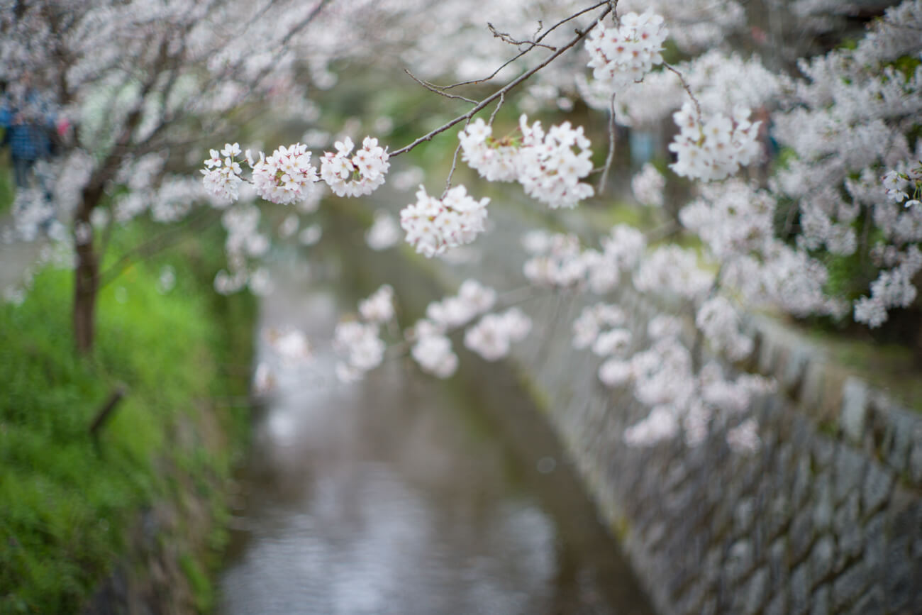 Noctilux-review-blog-lens-50mm-f1-f1.0-E58-v1-version1-Fast-lenses-wide-open-bokeh-leica-M9-M9P-digital-street-photography-kyoto-walk-sakura-flower-travel-dof-depth-of-field-ultra-fast-creaminess