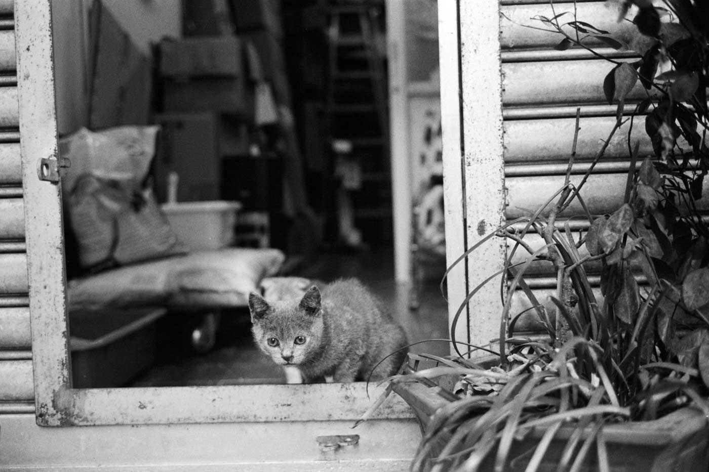 Leica-summicron-35mm-f2-8element-8-element-v1-version1-lens-review-blog-sharing-thoughts-compare-7element-gear-how-performance-baby-cat-kitten