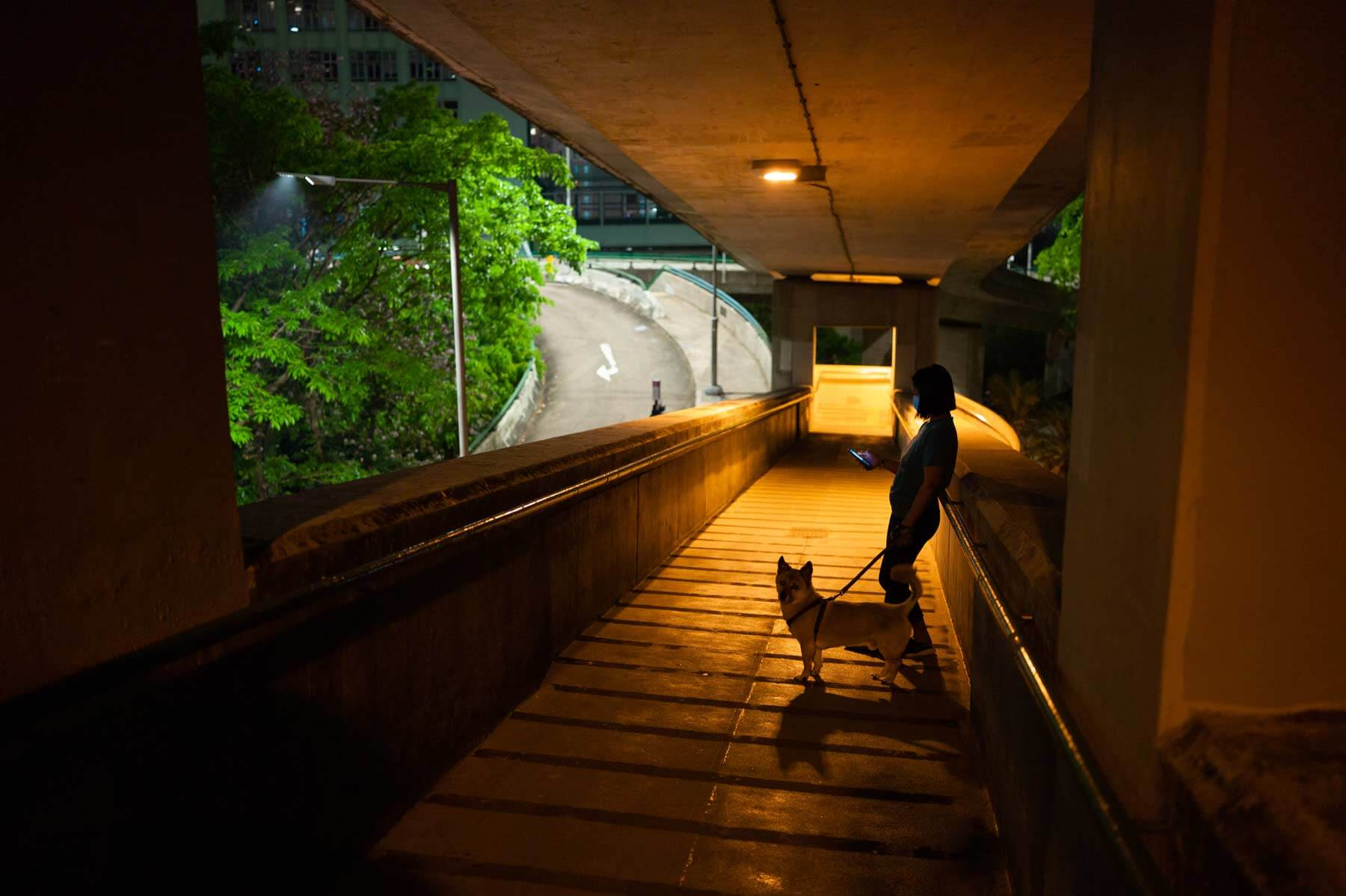 Voigtlander-35mm-f2-APO-lanthar-first-impression-review-lens-lenses-gear-test-new-vm-m-mount-sharpness-dog-silhouette-shadow-f2-wide-open-night-glenealy-hong-kong